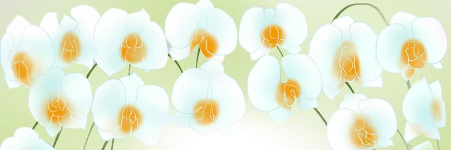ミディ胡蝶蘭5本立ホワイト胡蝶蘭白値段お祝い900-300。胡蝶蘭 値段 お祝い ギフト 5本 1本 3本 2本 母の日 プレゼント 開店祝い