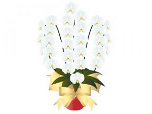 胡蝶蘭値段3本花
