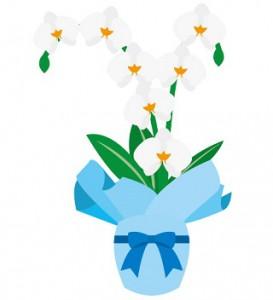 胡蝶蘭母の日ミディ。胡蝶蘭ミディ2本立ちイラスト