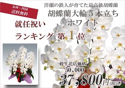 幸福の胡蝶蘭屋さん就任祝い1位大輪5本立ちホワイト胡蝶蘭 値段 お祝いお花 販売 通販 開店祝い お客様 還暦のお祝い 3本立てランキングおすすめ