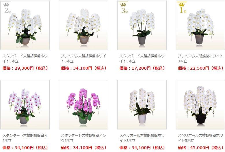 胡蝶蘭園.com就任祝い8本並び。