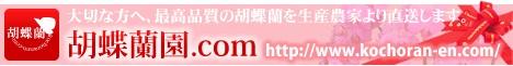 胡蝶蘭園.comの当日配達胡蝶蘭