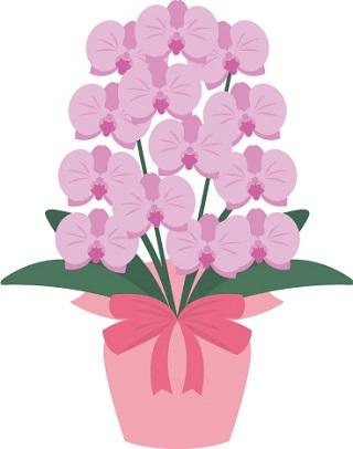 紫胡蝶蘭320-400。胡蝶蘭白値段お祝い900-300。胡蝶蘭の値段や価格の相場と、値段以上に素晴らしく素敵な胡蝶蘭をお祝いギフトにするには?胡蝶蘭ギフト通販店それぞれの特長を比較しています。値段別や開店祝い、就任祝い、還暦祝い、母の日、敬老の日のシーン別や5本、3本、2本、ミディ、ミニ胡蝶蘭などそれぞれのカテゴリで比較しています。