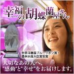 幸福の胡蝶蘭屋さん300バナーpng