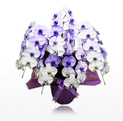 胡蝶蘭値段.com。胡蝶蘭園ドットコムは、過去にネット大賞も受賞した高品質の胡蝶蘭専門のネットショップで、開店・開業祝いや就任祝いで定番の3本、5本の白以外に大変珍しい、ブルー(青)やパープル(紫)の胡蝶蘭も扱っているのも特徴です。