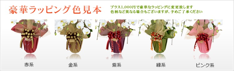 開店祝い胡蝶蘭、胡蝶蘭園.com