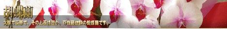 当選祝い 花 胡蝶蘭2位プレミア468バナー