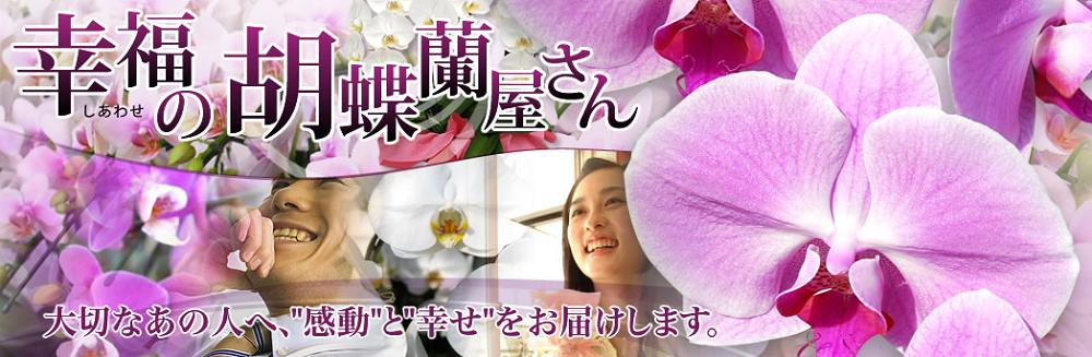 幸福の胡蝶蘭屋さん胡蝶蘭値段