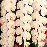 プレミアガーデン3本4リン18500円400-602