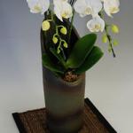 還暦祝いおすすめ胡蝶蘭kanreki-1