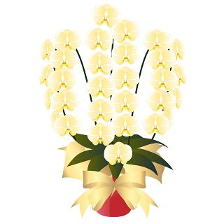 胡蝶蘭の3本立てで、特に最近話題になった、発売になった等々のおすすめ胡蝶蘭をその値段も含めてピックアップしました。