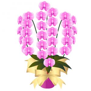 胡蝶蘭値段相場お祝いピンク胡蝶蘭イラスト
