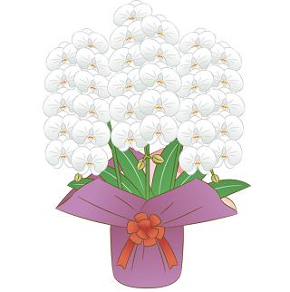 公演祝い花、胡蝶蘭の値段相場胡蝶蘭値段お祝い相場
