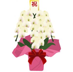 当日配達胡蝶蘭値段、お祝いおすすめ胡蝶蘭