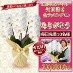 胡蝶蘭値段ランキング1万円