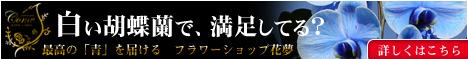 花夢青紫胡蝶蘭バナー468-1