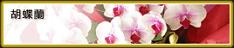 プレミアガーデン234豊洲,花屋,安い,胡蝶蘭,スタンド花,当日,配達,値段