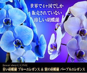 胡蝶蘭値段花夢青紫胡蝶蘭バナー300