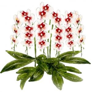 胡蝶蘭の値段相場のお祝い胡蝶蘭、人気おすすめ胡蝶蘭について胡蝶蘭専門ネット通販店を値段・価格、サービス満足度等から独自に比較しておすすめ度をランキング形式でご紹介しています。アイキャッチ画像