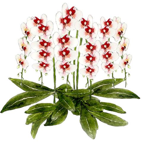 誕生日やお祝い事で名古屋栄、錦3丁目のママさんやあの娘、キャバ嬢さんに胡蝶蘭を贈るなら、名古屋栄錦に当日配達も可能、他人と差をつけたいなら!おすすめネット胡蝶蘭についてまとめています。