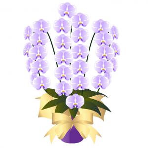 胡蝶蘭値段イラスト紫胡蝶蘭,色,種類,値段,ランク,選び方,花言葉,珍しい色,紫,青,ピンク