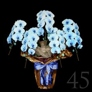 花夢5本胡蝶蘭値段