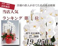 幸福1位3本200幸福の胡蝶蘭屋さん胡蝶蘭 値段 お祝いお花 販売 通販 開店祝い お客様 還暦のお祝い