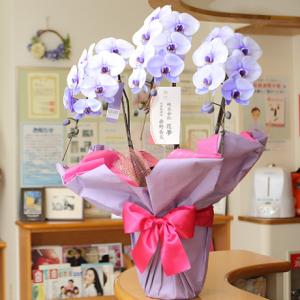 花夢紫胡蝶蘭3本値段おすすめ