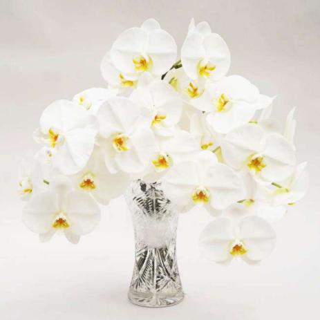 お供えの花で胡蝶蘭を選びたい方へ、その値段や色も含めて、お盆や法事、一周忌、四十九日などの胡蝶蘭について等々お供え胡蝶蘭のおすすめ、ミディ、1本、2本、簡単まとめです。お盆お供え胡蝶蘭5本大輪切り花ボックス