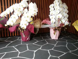 胡蝶蘭5本3本比較値段