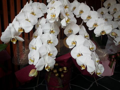 さいたま、大宮仲町、大宮銀座のあの方、あの娘へお祝いの胡蝶蘭を当日でも贈ってもらえる花屋さんをお探しの方へ、スマホから簡単に選んでおまかせ!で注文できるネット胡蝶蘭花屋さんについてまとめています。大宮仲町、大宮銀座で懇意にしている花屋さんがない方なら特に便利で、ワンランク上の胡蝶蘭を贈って喜ばれますよ。