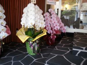 崎お祝い胡蝶蘭、お花、当日配達