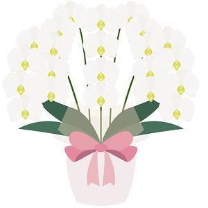 イラスト産地直送の胡蝶蘭通販とは?産地直送の胡蝶蘭通販のメリット、デメリットと、おすすめの産地直送の胡蝶蘭通販を簡単にまとめています。