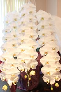 プレミアガーデン胡蝶蘭3本52リン25000-200縦長