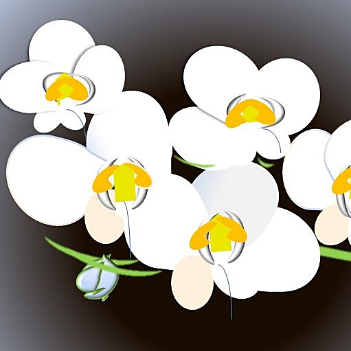 胡蝶蘭の値段、3本、5本、選挙当選祝い、開店祝い、就任祝い、青い胡蝶蘭、紫の胡蝶蘭、当日配達胡蝶蘭など。