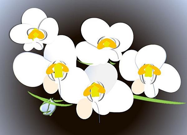 胡蝶蘭3本の値段相場とおすすめランキング。おすすめ胡蝶蘭値段600。3本胡蝶蘭について、その値段や特徴を各ネット胡蝶蘭通販の人気定番のものをピックアップしています。3本胡蝶蘭の場合について簡単にまとめてみました。3本胡蝶蘭の値段や価格の相場と、値段以上に素晴らしく素敵な胡蝶蘭のお祝いギフト、おすすめ胡蝶蘭ギフト、値段別や開店祝い、開業祝い、就任祝い、移転祝い、選挙当選祝い、上場祝い等々、還暦祝い、母の日、敬老の日のシーン別でおすすめの3本胡蝶蘭、各ショップハズレなし!のイチオシ3本胡蝶蘭の簡単まとめです。
