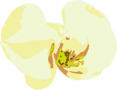 イラスト胡蝶蘭値段400