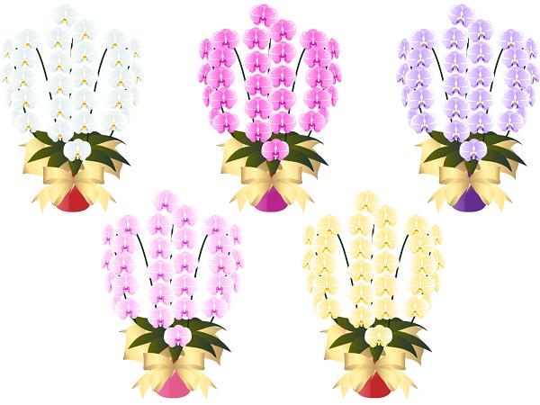胡蝶蘭の値段と通販イラスト5本の胡蝶蘭600。胡蝶蘭の値段や相場について。3本、5本、お祝い胡蝶蘭、開店祝い、開業祝い、選挙当選祝い、移転祝い、就任祝い、上場祝いなど、当日配達胡蝶蘭、青い胡蝶蘭、胡蝶蘭紫etc。ネットで簡単に注文できる胡蝶蘭通販の中には注文日即日配送対応可能のショップもあります。胡蝶蘭値段を決めるポイント、比較方法、即日配送&当日配送の条件やしっておきたい注意点、おすすめの胡蝶蘭、人気定番の胡蝶蘭を集めています。