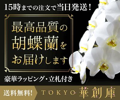 グリーンジャングル胡蝶蘭TOKYO華倉庫400