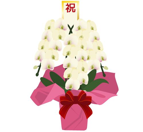 当選祝い胡蝶蘭イラスト500