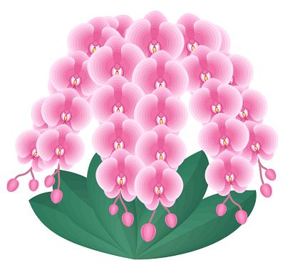 胡蝶蘭値段イラスト3本ピンク、当日配達胡蝶蘭