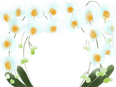 イラストコロナ自粛でお祝いごとが減る事から胡蝶蘭の売れ行きも激減、値段にも影響しているそうです。そんな時期での胡蝶蘭や、その値段等の話題をピックアップしています。胡蝶蘭値段白イラスト400
