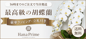ハナプライムグリーンジャングル胡蝶蘭バナー300-2、当選祝い胡蝶蘭、値段