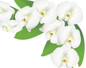 胡蝶蘭値段イラスト胡蝶蘭フレーム400、胡蝶蘭値段相場白3本5本お祝い