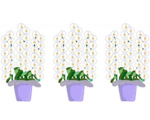 胡蝶蘭値段通販イラスト600胡蝶蘭,お祝い,なぜ,値段,開店祝い,就任祝い,開業祝い,当選祝い,移転祝い,胡蝶蘭値段,おすすめ,比較,大輪,ミディ,3本,5本,2本,お祝い,安い,高い,お供え,7本