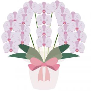 胡蝶蘭値段3本淡いピンクイラスト2