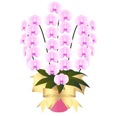 胡蝶蘭値段3本淡いピンクイラスト。胡蝶蘭値段3本開店祝い、開業祝い、就任祝い、移転祝い、当選祝い、還暦のお祝い、新築祝い本立て、3本立て