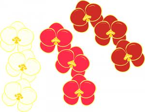 胡蝶蘭値段イラスト、胡蝶蘭値段高い安い相場3本5本