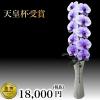 胡蝶蘭1本の値段は?おすすめ胡蝶蘭