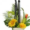 祝い竹炭で胡蝶蘭の代わりに特別なお祝いで。
